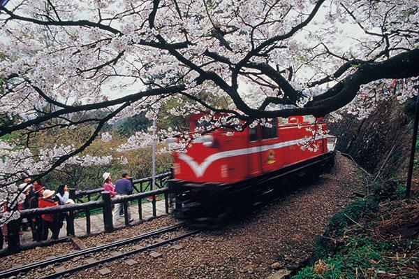 铁路春天花